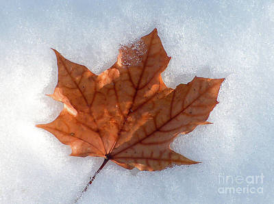 Photograph - Early Snow by Kevin McCarthy