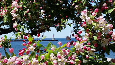 Photograph - Early Spring Blossoms At The Waterfront by Wendy Shoults
