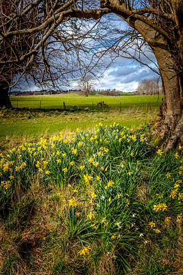 Daffodil Hill Photograph - Early Spring Daffodils by W Chris Fooshee