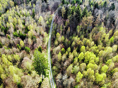 Photograph - Early Spring Forest From Above by Matthias Hauser