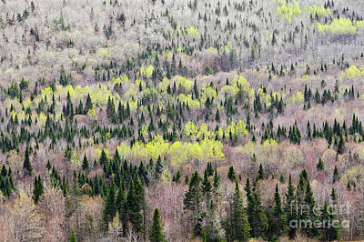 Photograph - Early Spring Hillside by Alan L Graham
