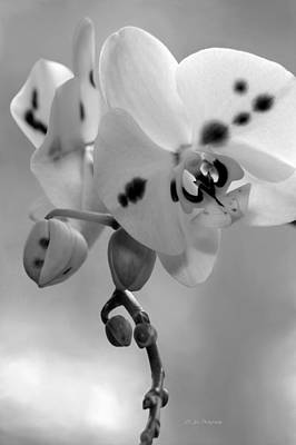 Photograph - Early Spring In Black And White by Jeanette C Landstrom