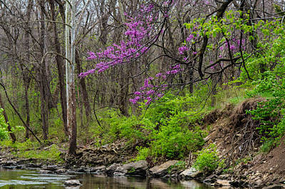 Photograph - Early Spring On Mill Creek 2 by Jeff Phillippi