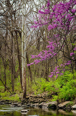 Photograph - Early Spring On Mill Creek by Jeff Phillippi