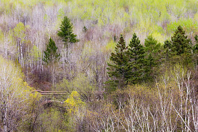 Photograph - Early Spring Palette by Mary Amerman