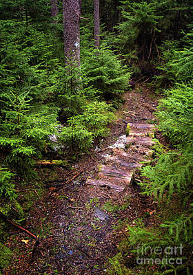 Photograph - Early Spring Trail, Boothbay, Maine   -31981 by John Bald