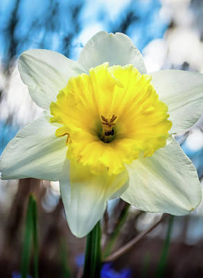 Photograph - Early Spring by Wayne King