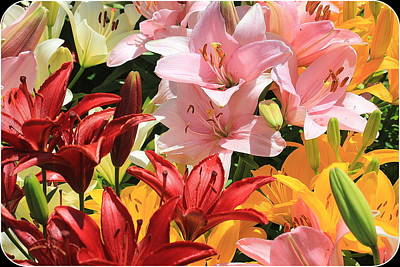 Photograph - Early Summer Beauties - Daylilies by Dora Sofia Caputo Photographic Art and Design