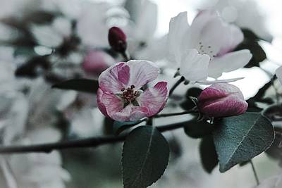 Photograph - Early Summer Blossom No.1 by Desmond Raymond