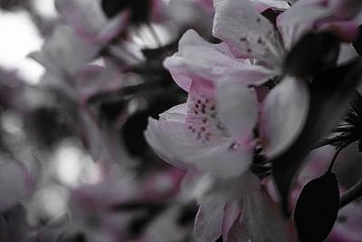 Photograph - Early Summer Blossom No.2 by Desmond Raymond
