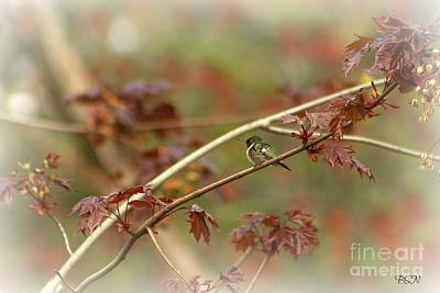 Photograph - Early Summer Hummer by Barbara S Nickerson