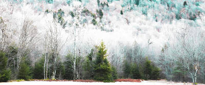 Photograph - Early Winter At Woodcraft Camp by David Patterson