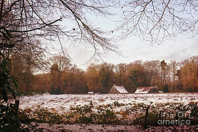 Photograph - Early  Winter by Gerhard Hoogterp