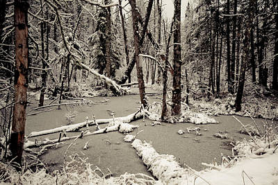 Early Winter Art Print by Todd Bissonette