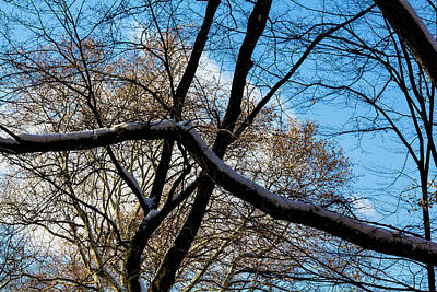 Photograph - Early Winter Trees And Snow by Robert Ullmann