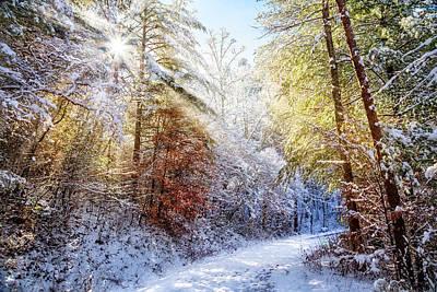 Photograph - Early Winter's Walk by Debra and Dave Vanderlaan