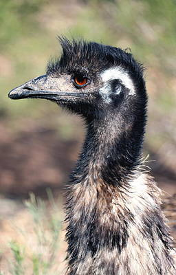 Emu Digital Art - Earnest Emu by Lisa S Baker