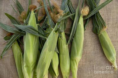 Ear Of Corn Photograph - Ears Of Corn by Inga Spence