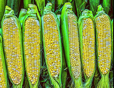 Photograph - Ears Of Corn by Nick Zelinsky