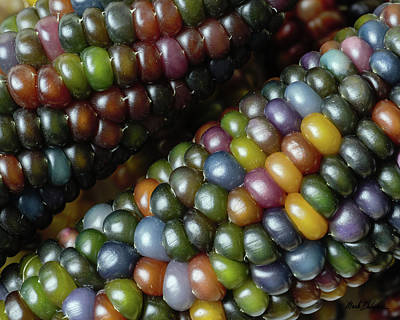 Photograph - Ears Of Glass Gem Corn by Mark Dahmke