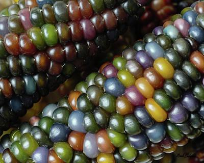 Photograph - Ears Of Glass Gem Corn by Mark Dahmke