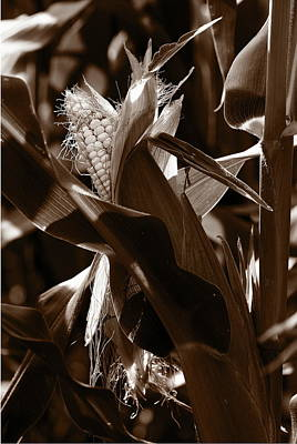 Photograph - Ears To You Corn - Sepia by Angela Rath