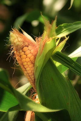 Photograph - Ear's To You Corn by Angela Rath