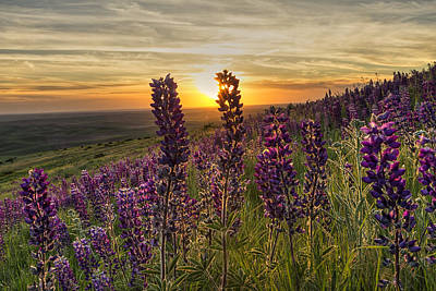 Fields Of Flowers Photograph - Earth Laughs In Flowers by Mark Kiver