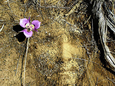 Photograph - Earth Memories - Desert Flower # 2 by Ed Hall