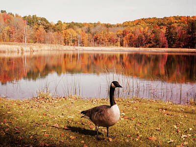 Photograph - Earth Tone Autumn Pond Goose by Aimee L Maher Photography and Art Visit ALMGallerydotcom