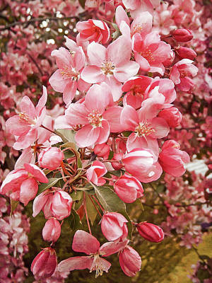 Photograph - Earth Tone Crab Apple Blossoms by Aimee L Maher ALM GALLERY
