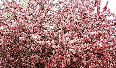 Photograph - Earth Tone Crab Apple Tree by Aimee L Maher ALM GALLERY