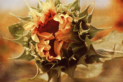 Photograph - Earth Tone Elegant Sunflower by Aimee L Maher ALM GALLERY