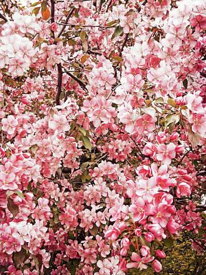 Earth Tones Apple Blossoms  Art Print
