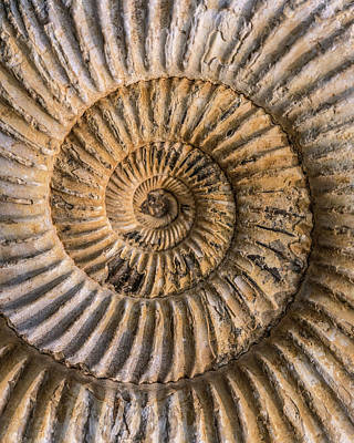 Photograph - Earth Treasures - An Old Ammonite Shell by Jaroslaw Blaminsky