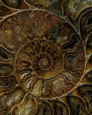 Photograph - Earth Treasures - Brown Amonite by Jaroslaw Blaminsky