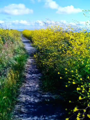 San Leandro Photograph - East Bay Trail by Carl Jackson