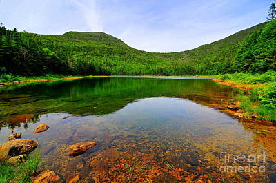 East Pond Art Print by Catherine Reusch Daley