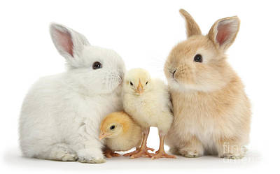 Photograph - Easter Bunnies And Chicks by Warren Photographic