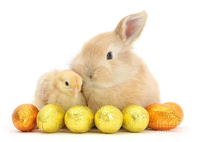 Photograph - Easter Bunny And Chick by Warren Photographic