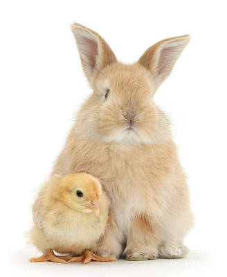 Photograph - Easter Bunny And Friend by Warren Photographic