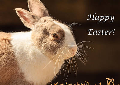 Photograph - Easter Bunny Greeting Card by Joni Eskridge