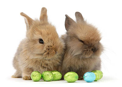 Photograph - Easter Bunny Pair by Warren Photographic