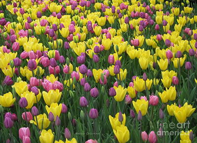Photograph - Easter Colors by Kathie Chicoine