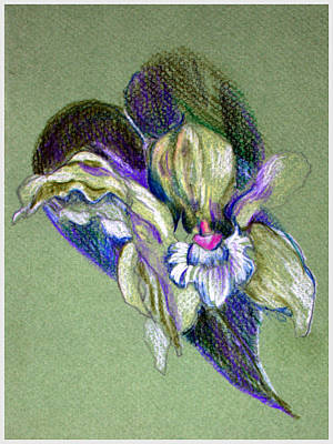 Orchid Drawing - Easter Corsage by Mindy Newman