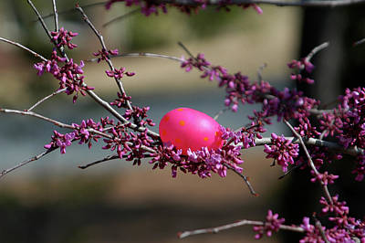 Wall Art - Photograph - Easter In Fuchsia And Purple by Alynne Landers