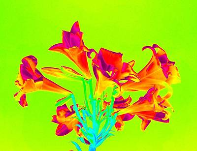 Photograph -  Vibrant Lilies by Karen J Shine