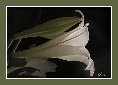 Photograph - Easter Lily Card by Nancy Griswold