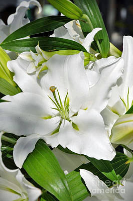 Photograph - Easter Lily by Maureen Cavanaugh Berry