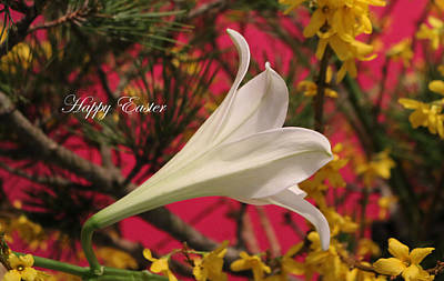 Photograph - Easter Lily With Text by Living Color Photography Lorraine Lynch